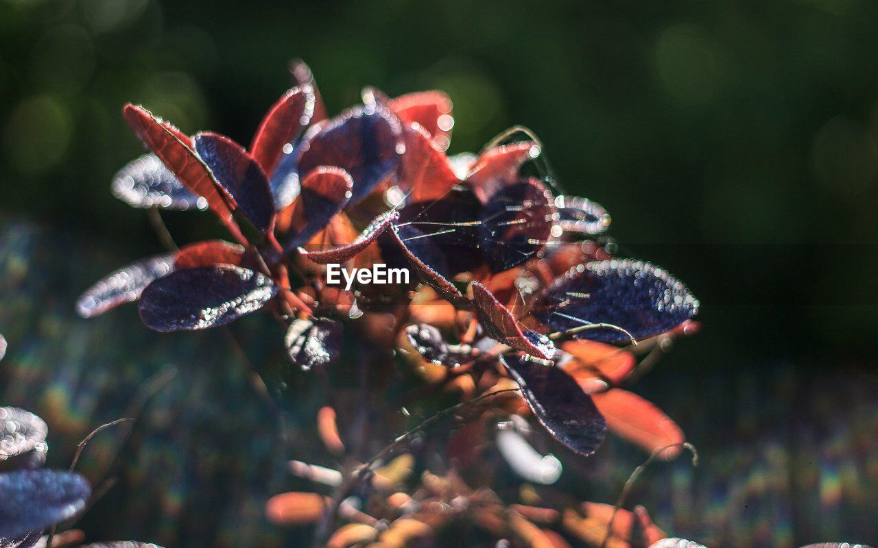 growth, nature, beauty in nature, plant, no people, outdoors, day, red, close-up, flower, fragility, tree, freshness
