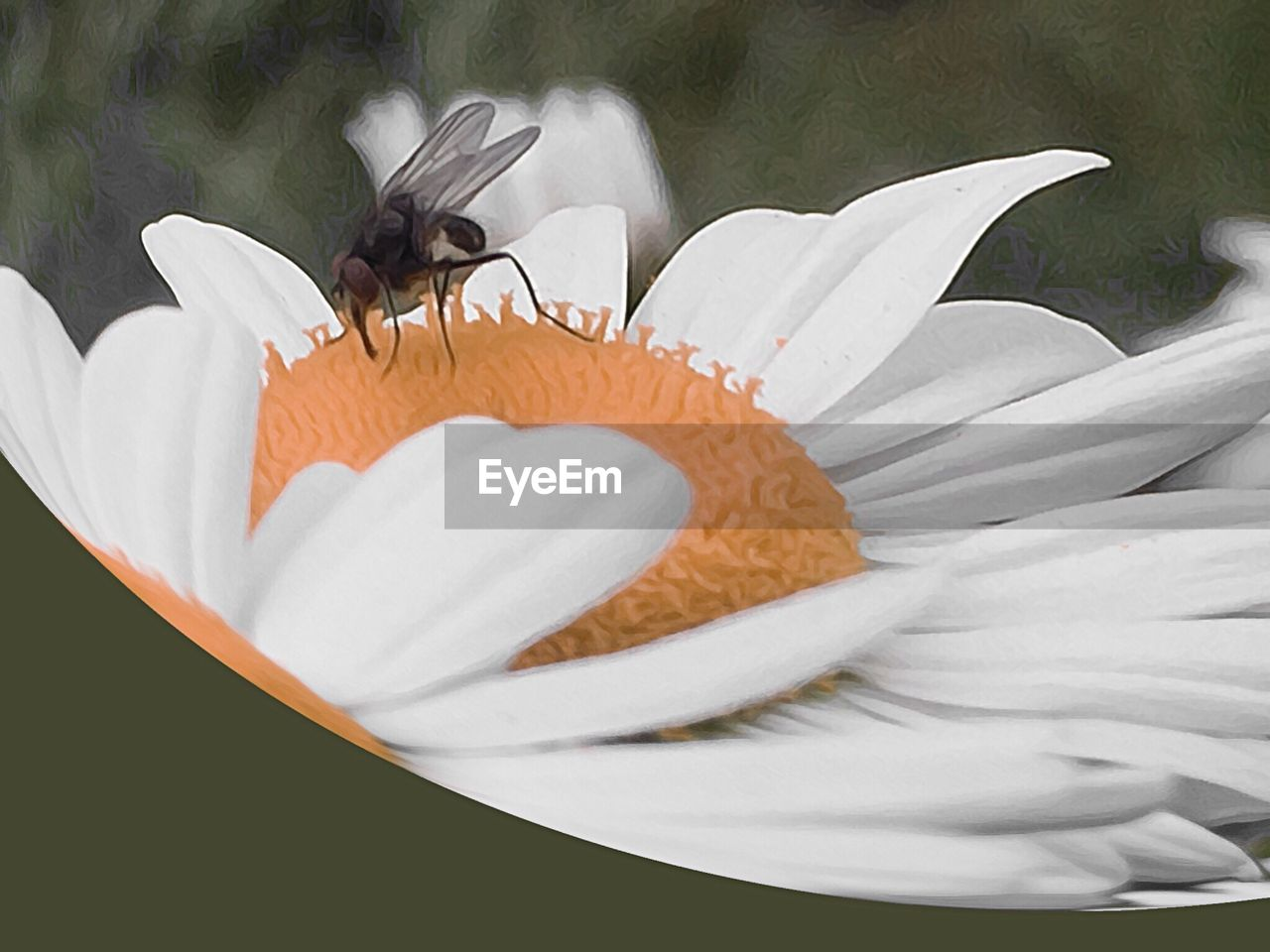 one animal, flower, animal themes, petal, animals in the wild, insect, no people, freshness, animal wildlife, fragility, nature, flower head, day, close-up, beauty in nature, bird, outdoors, mammal