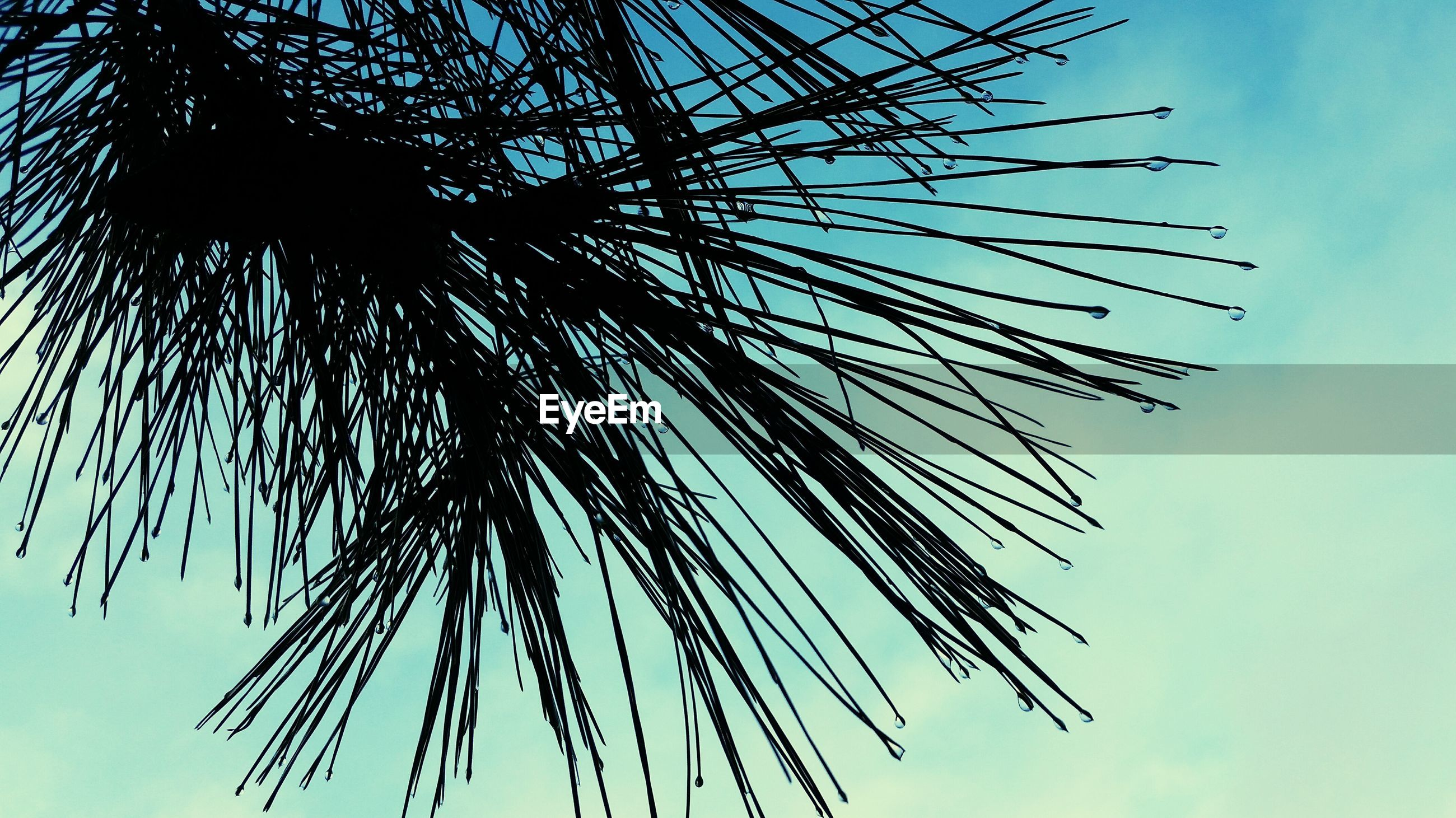 low angle view, sky, clear sky, growth, silhouette, nature, outdoors, no people, day, palm tree, beauty in nature, close-up, tree, tall - high, blue, branch, tranquility, fragility, part of, leaf