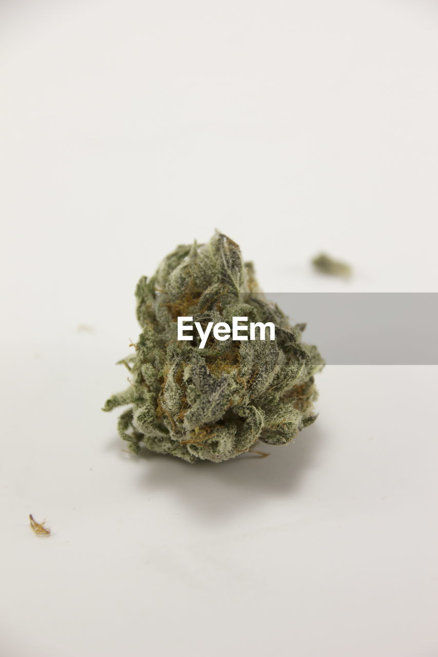 studio shot, white background, marijuana - herbal cannabis, indoors, medicine, herbal medicine, healthcare and medicine, close-up, herb, copy space, no people, plant, still life, cannabis plant, food and drink, alternative medicine, single object, selective focus, food, medical cannabis