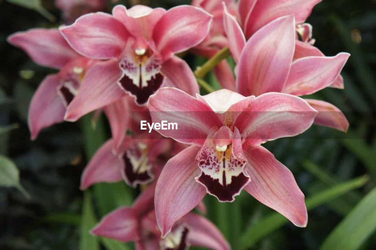 flower, petal, fragility, flower head, nature, growth, pink color, beauty in nature, plant, close-up, focus on foreground, freshness, outdoors, day, no people, blooming, orchid