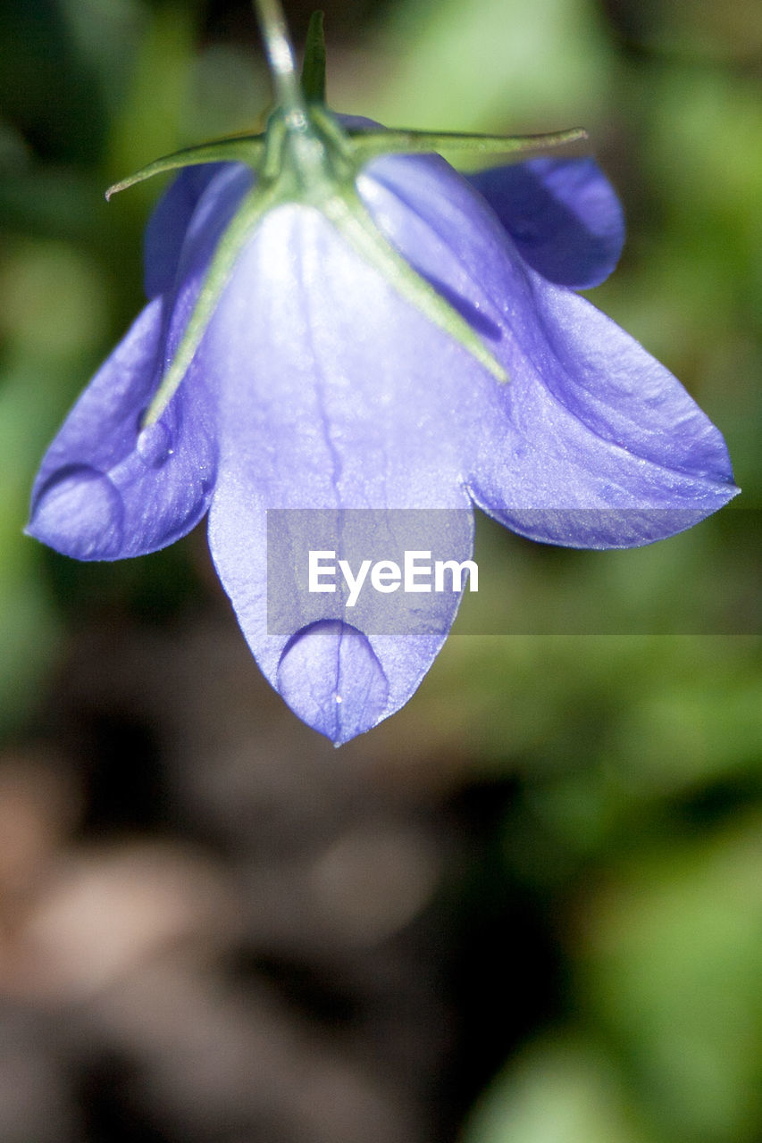 flower, beauty in nature, purple, nature, fragility, focus on foreground, petal, close-up, growth, no people, day, freshness, outdoors, flower head, plant