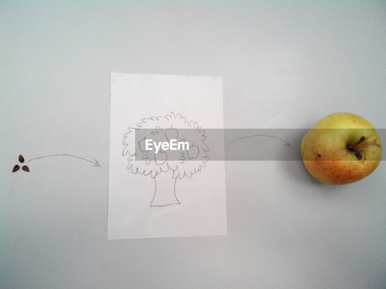 fruit, food, drawing - art product, food and drink, healthy eating, indoors, still life, apple - fruit, wellbeing, creativity, paper, text, table, art and craft, copy space, western script, no people, directly above, studio shot, close-up