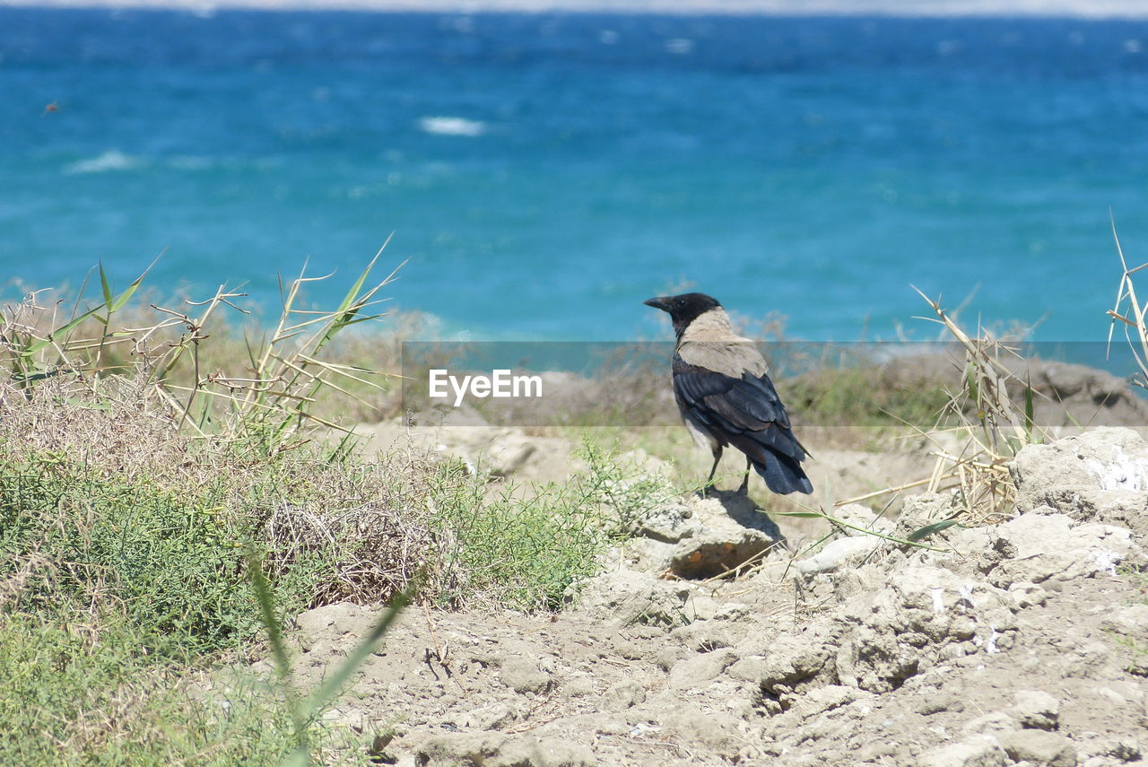 animal, sea, water, animal wildlife, animal themes, nature, animals in the wild, bird, land, one animal, vertebrate, beach, day, no people, plant, beauty in nature, grass, sand, outdoors
