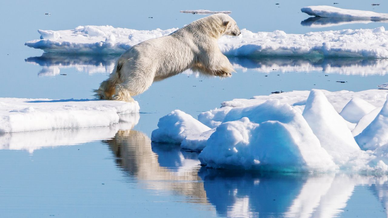 water, one animal, animal, animal themes, mammal, lake, reflection, winter, vertebrate, cold temperature, snow, nature, day, waterfront, beauty in nature, pets, canine, dog, domestic, no people, ice