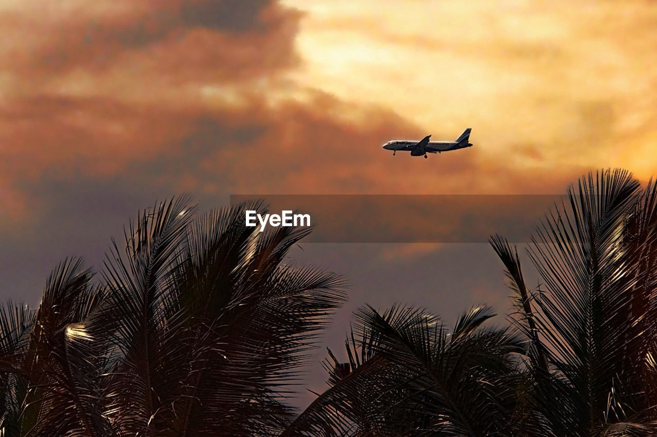 sky, flying, cloud - sky, sunset, low angle view, tree, plant, air vehicle, beauty in nature, palm tree, nature, silhouette, mode of transportation, transportation, mid-air, no people, orange color, airplane, bird, vertebrate, outdoors, palm leaf