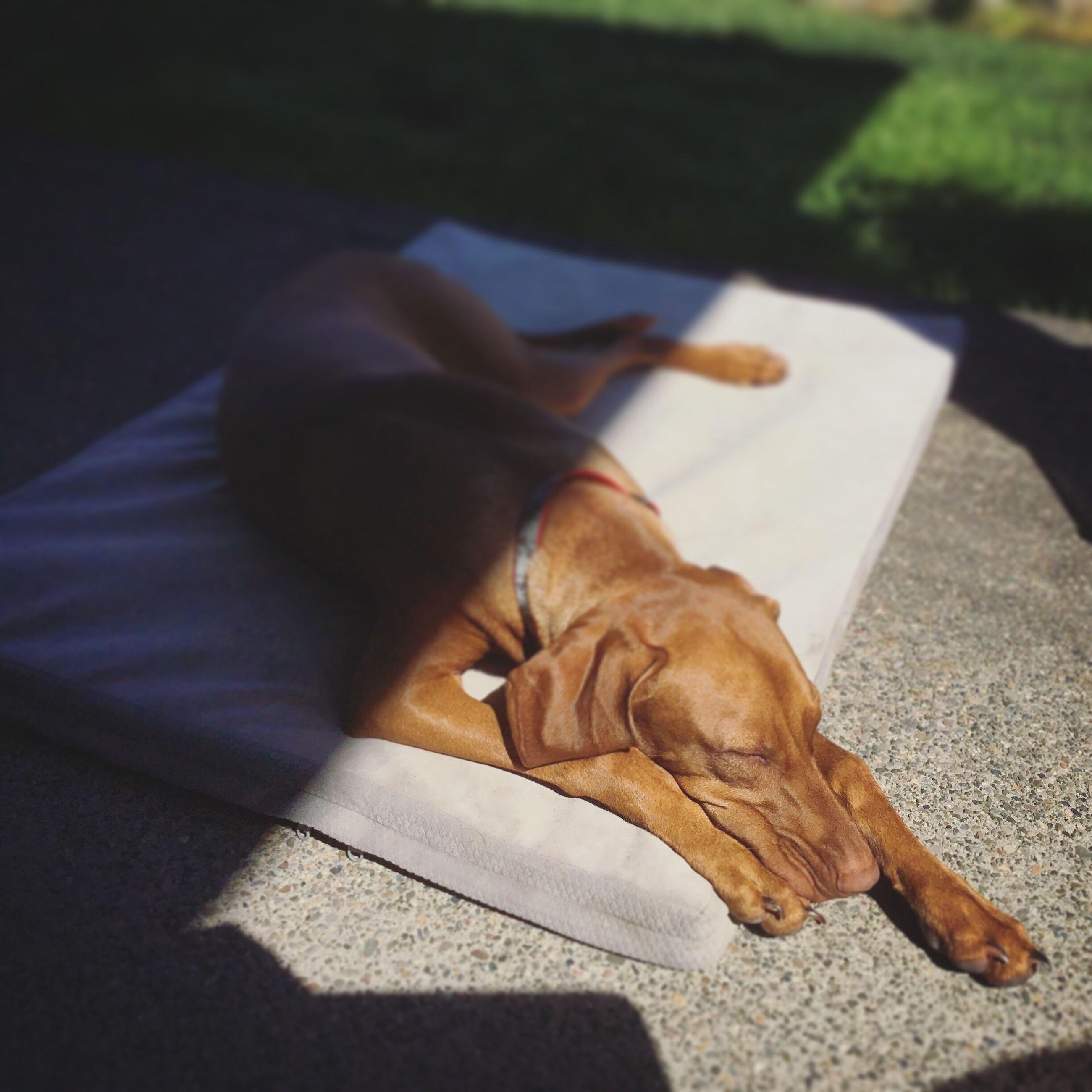 High angle view of dog sleeping outdoors