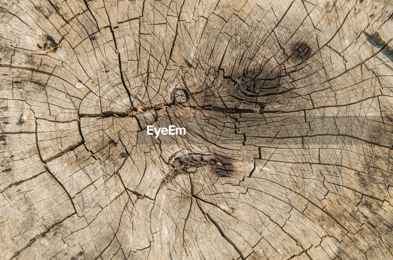 tree ring, cracked, tree stump, wood - material, textured, nature, cross section, concentric, tree, backgrounds, close-up, full frame, no people, outdoors, wood grain, day, tree trunk, time