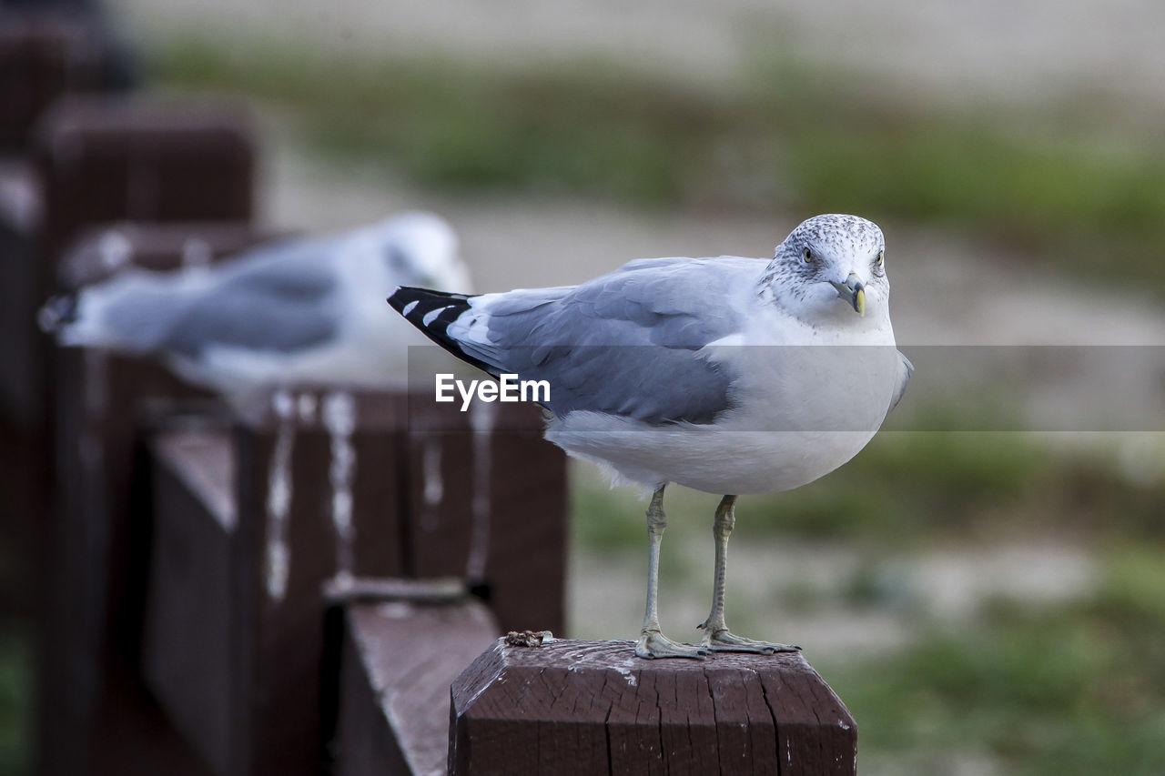Seagulls Perching On Wooden Railing