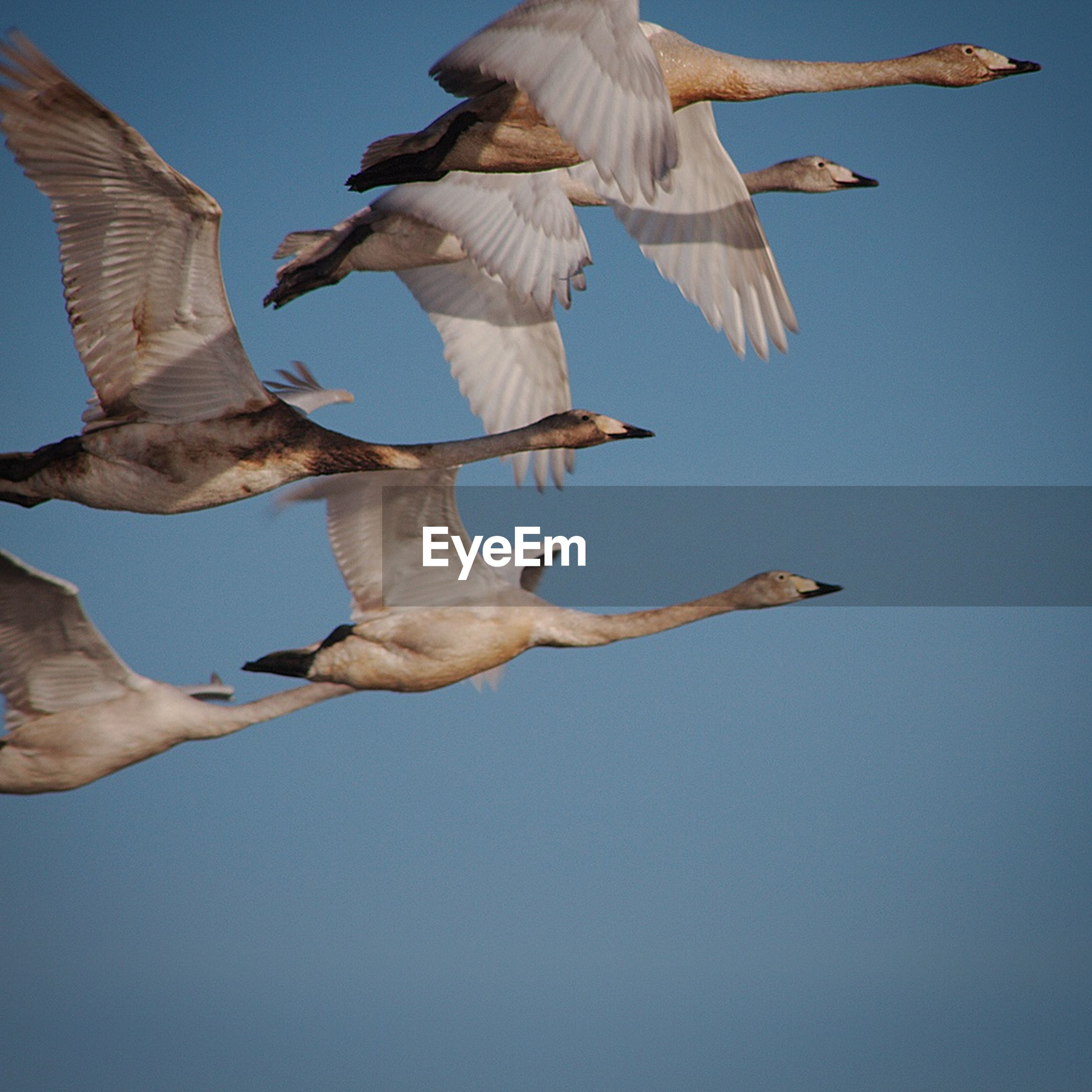 low angle view, flying, animal themes, bird, spread wings, clear sky, one person, mid-air, animals in the wild, one animal, blue, wildlife, sky, full length, seagull, person, day, animal wing, freedom, sunlight
