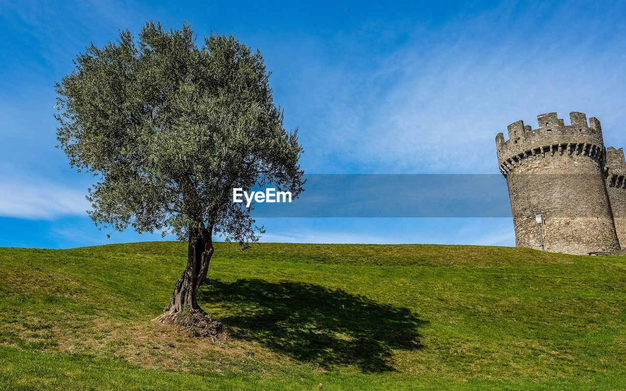 tree, plant, history, grass, sky, the past, architecture, field, nature, land, built structure, ancient, day, scenics - nature, building exterior, outdoors, green color, growth, environment, cloud - sky, no people, ruined