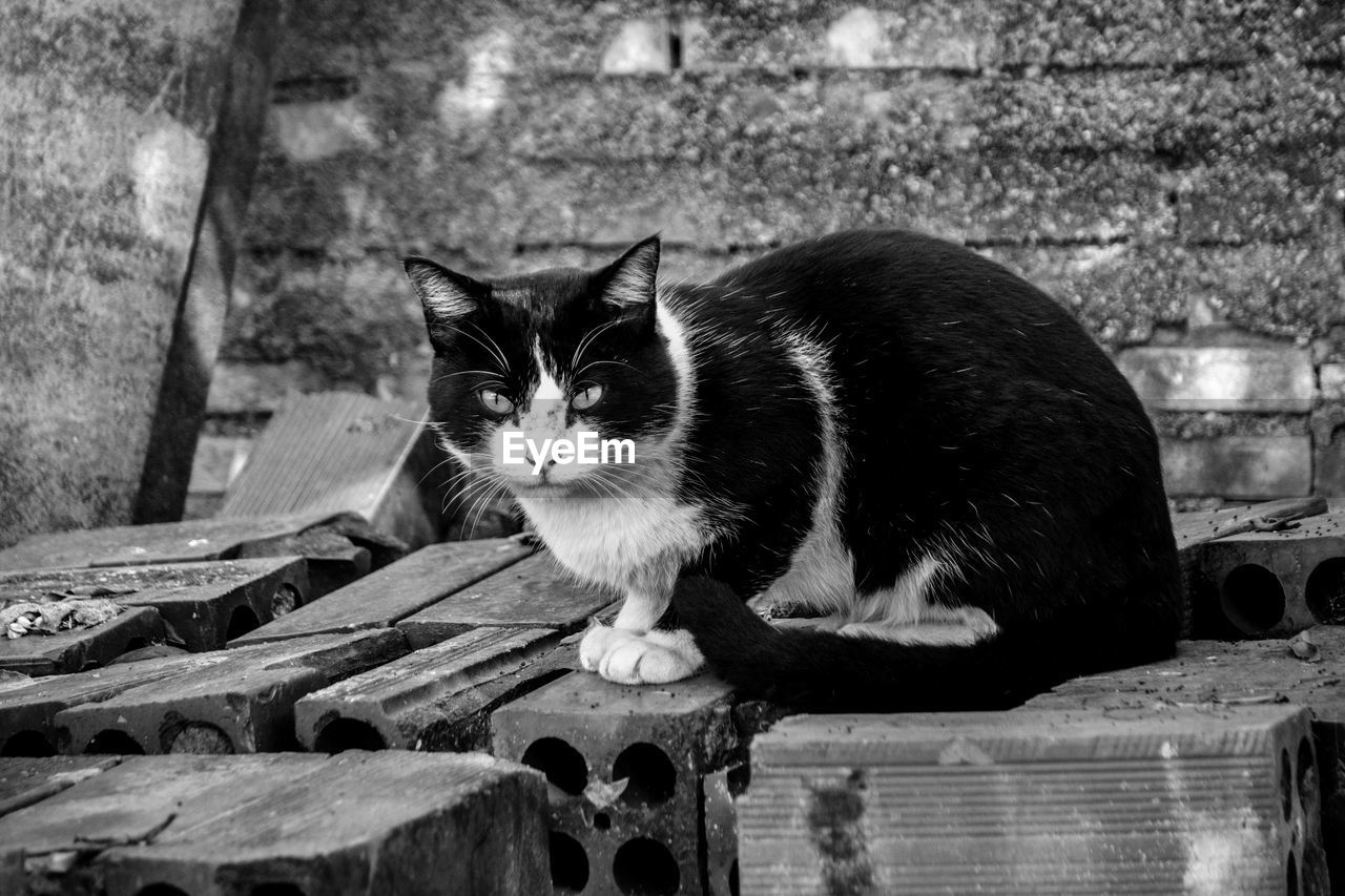 cat, mammal, domestic cat, feline, pets, domestic, domestic animals, one animal, vertebrate, wood - material, focus on foreground, looking at camera, portrait, no people, day, whisker, relaxation