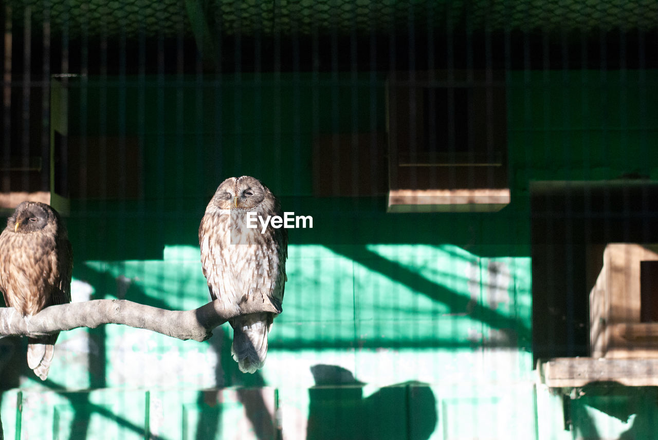 animal, animal themes, animal wildlife, vertebrate, bird, perching, animals in the wild, animals in captivity, one animal, bird of prey, nature, day, zoo, no people, focus on foreground, outdoors, sunlight, wood - material, green color, cage