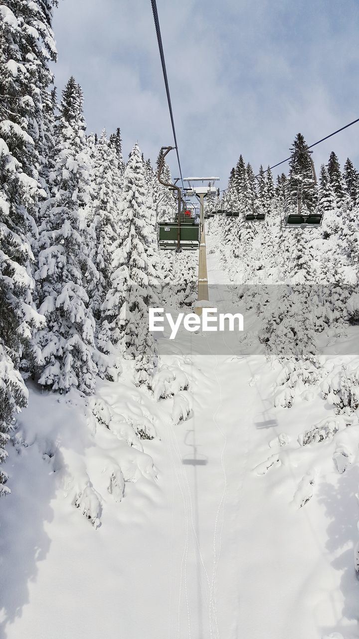 Ski lift amidst snow covered trees