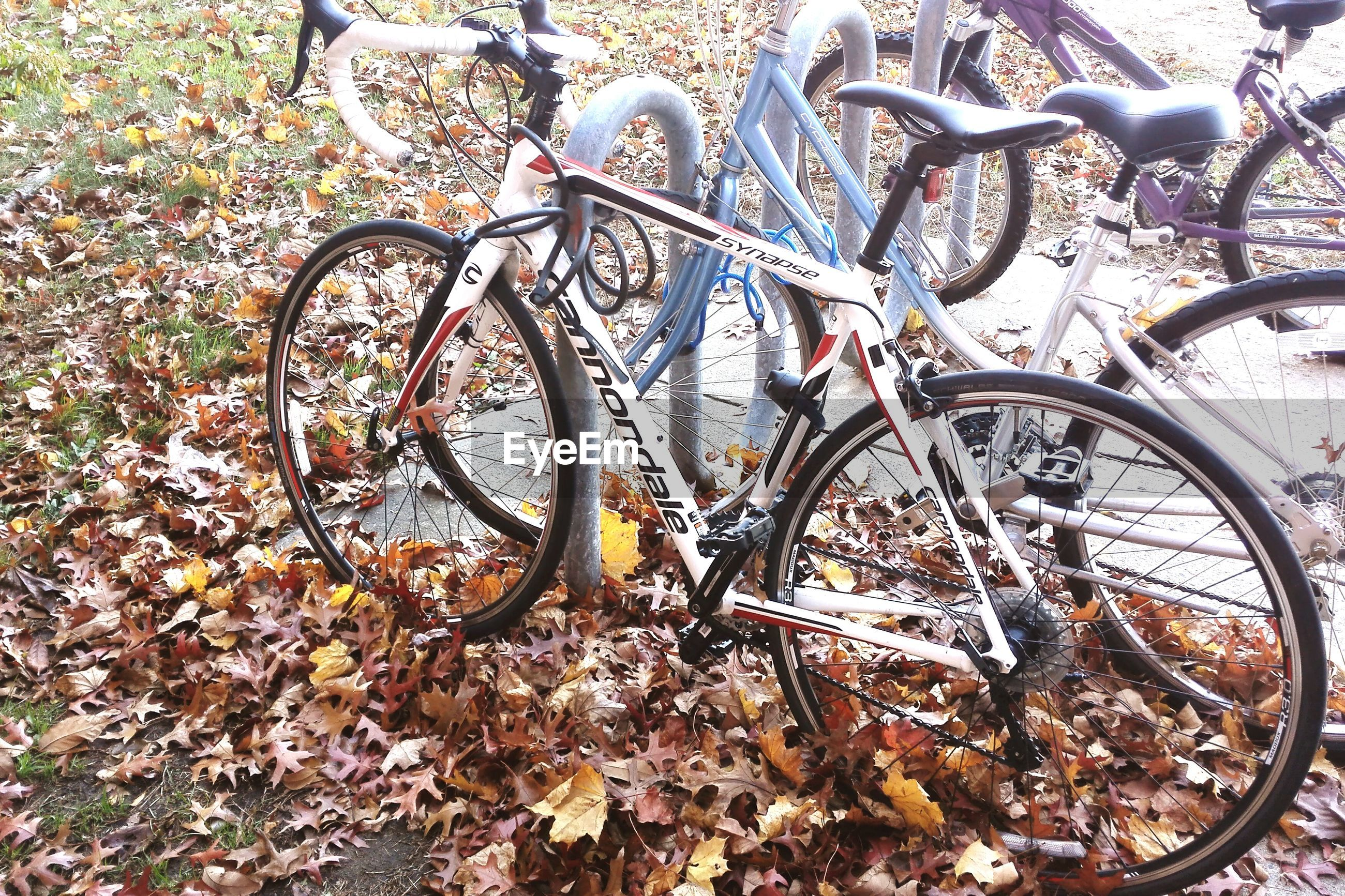 bicycle, high angle view, transportation, wheel, land vehicle, mode of transport, stationary, day, no people, metal, outdoors, parked, plant, dry, abandoned, leaf, nature, ground, sunlight, wall - building feature