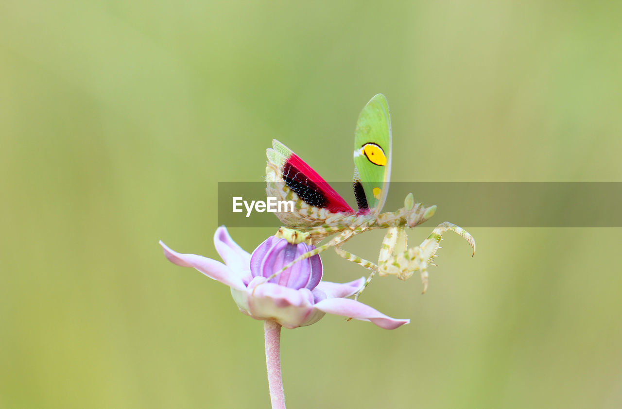 flower, flowering plant, plant, beauty in nature, animals in the wild, animal wildlife, vulnerability, animal themes, fragility, insect, freshness, invertebrate, one animal, animal, close-up, flower head, petal, growth, animal wing, nature, no people, butterfly - insect, pollination, pollen, butterfly