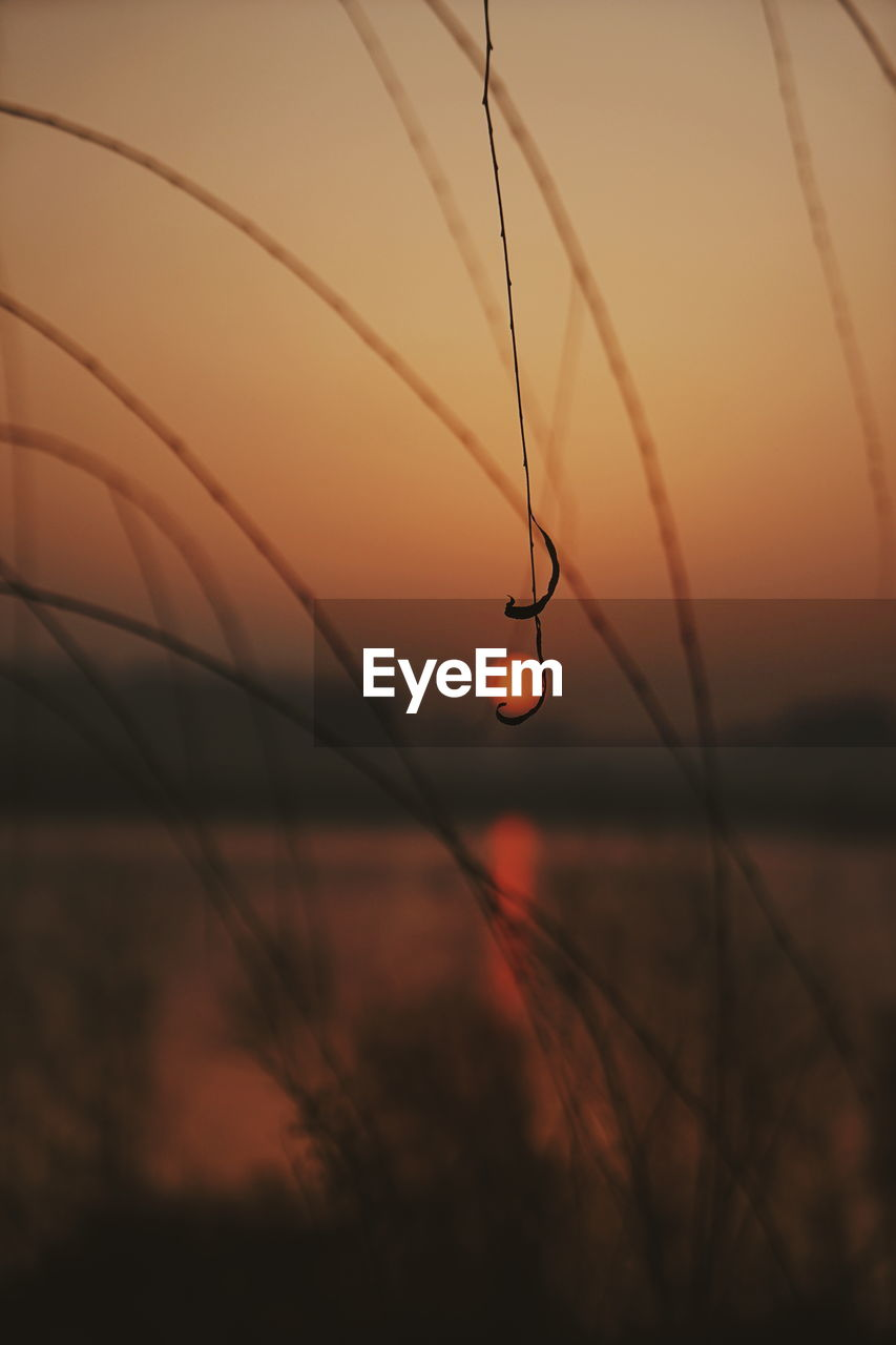 sunset, sky, beauty in nature, orange color, focus on foreground, nature, no people, tranquility, close-up, plant, scenics - nature, silhouette, sun, water, selective focus, growth, tranquil scene, outdoors, twig