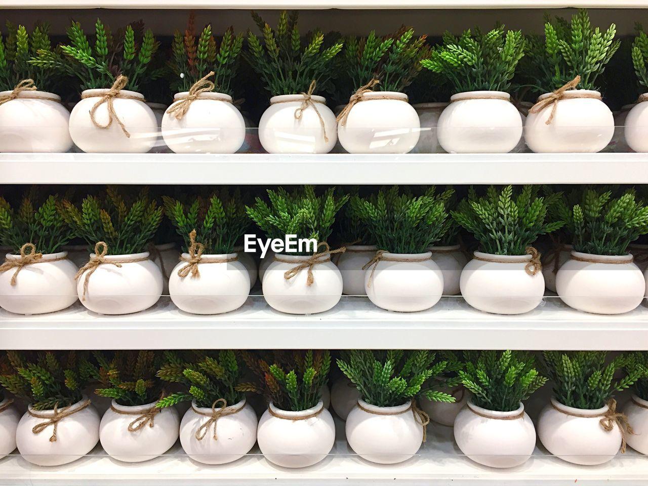 Artificial plants in shelves