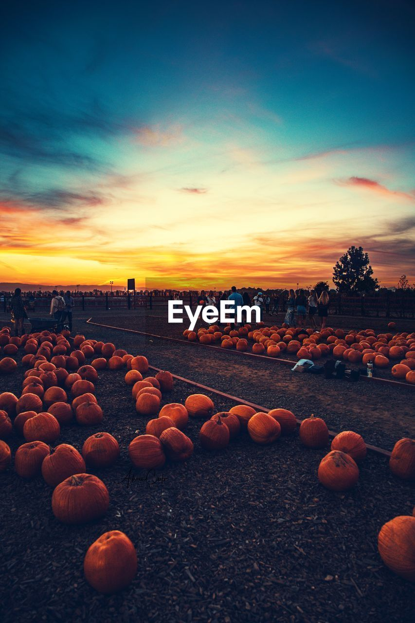 sky, orange color, sunset, cloud - sky, food, food and drink, large group of objects, no people, land, nature, pumpkin, beauty in nature, tranquil scene, wellbeing, healthy eating, outdoors, scenics - nature, tranquility, abundance, rock