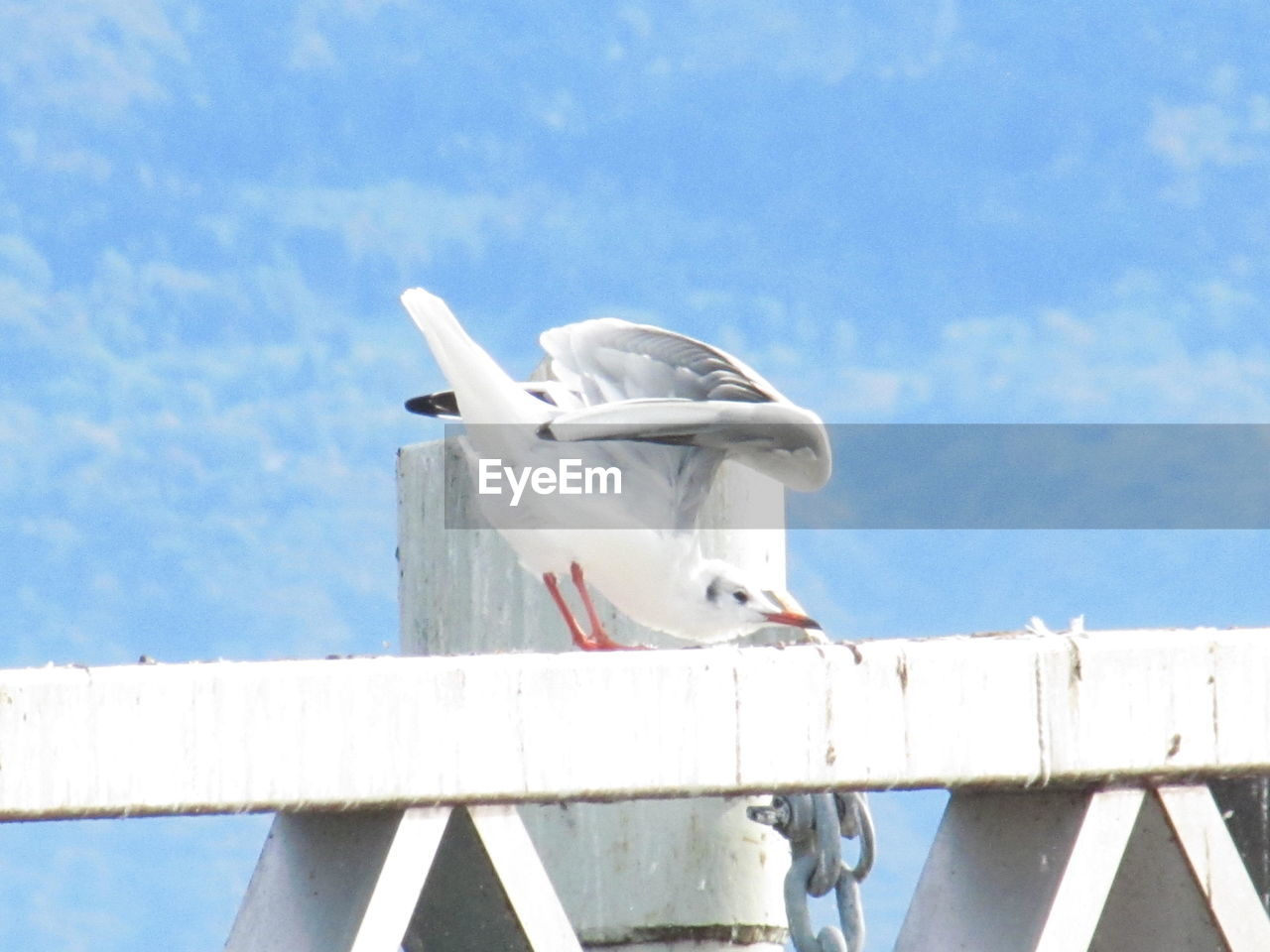 bird, animal, animal themes, animals in the wild, vertebrate, animal wildlife, seagull, perching, sky, one animal, day, white color, no people, nature, low angle view, railing, cloud - sky, sea bird, outdoors, water