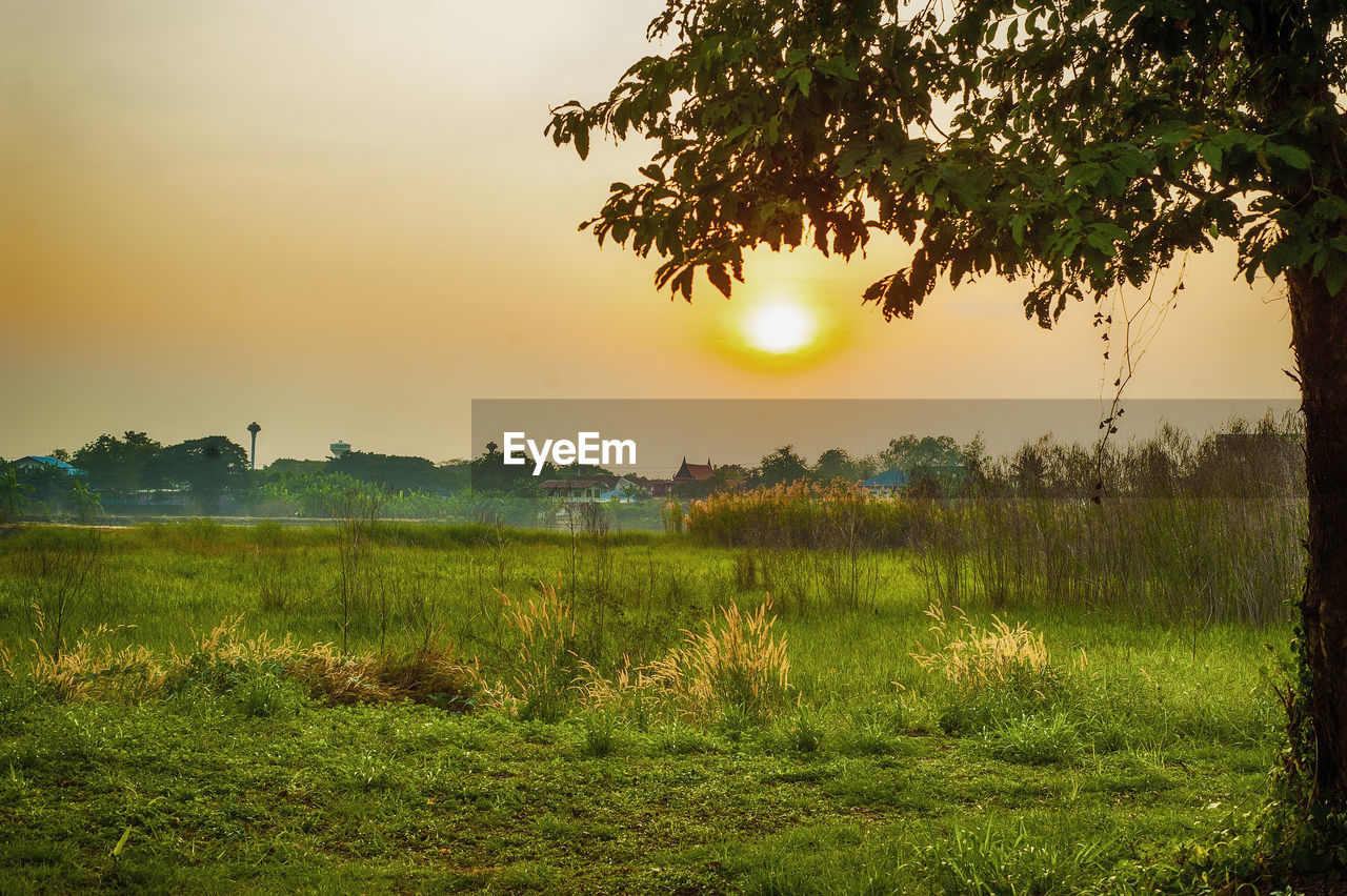 plant, sky, tranquility, tranquil scene, beauty in nature, scenics - nature, tree, sunset, grass, land, environment, landscape, nature, growth, field, non-urban scene, no people, green color, idyllic, sun, outdoors