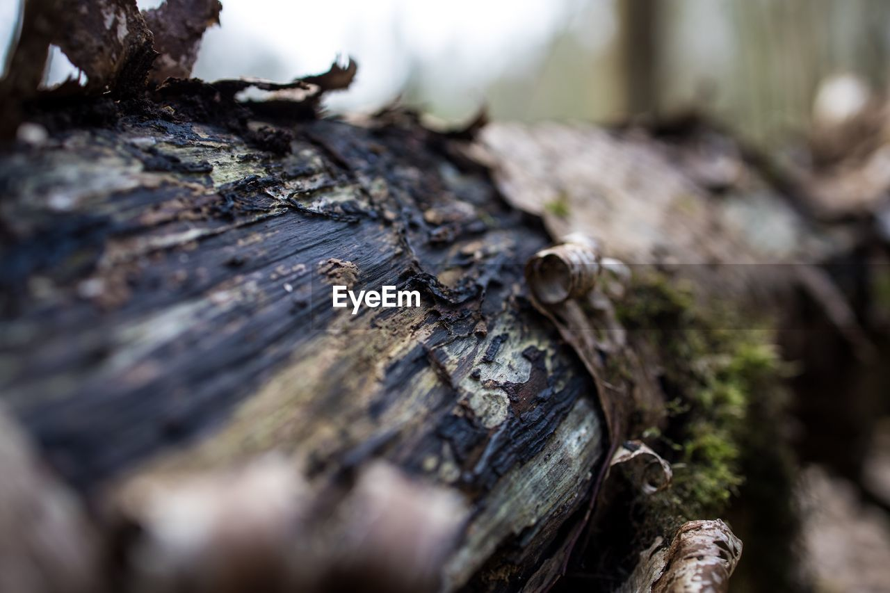 selective focus, tree, wood - material, tree trunk, trunk, close-up, day, no people, plant, nature, textured, rough, outdoors, beauty in nature, plant bark, log, moss, mushroom, pattern, bark, toadstool