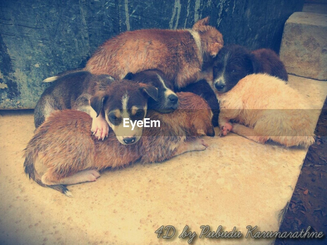 animal themes, mammal, domestic animals, pets, young animal, dog, indoors, relaxation, togetherness, puppy, no people, day, nature