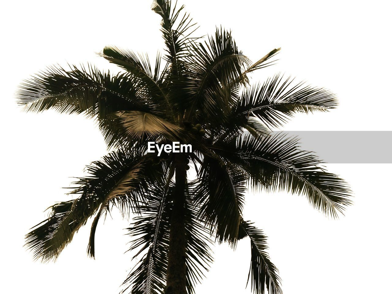 High section of palm tree against clear sky
