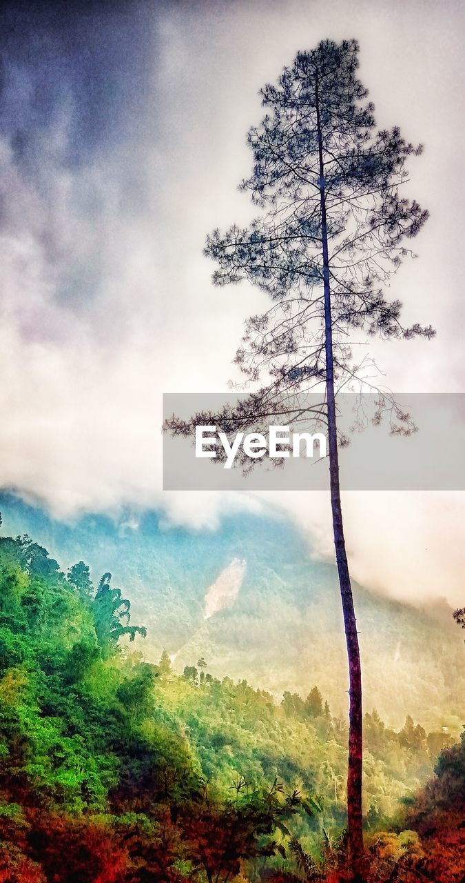 cloud - sky, sky, tree, nature, plant, mountain, scenics - nature, environment, no people, beauty in nature, landscape, tranquility, land, day, tranquil scene, non-urban scene, forest, outdoors, idyllic