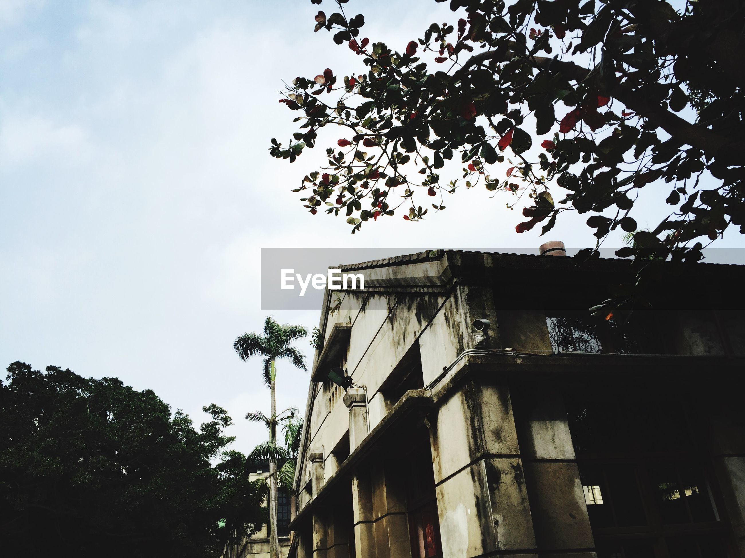 low angle view, architecture, built structure, building exterior, tree, sky, branch, growth, house, outdoors, no people, day, building, window, nature, residential structure, residential building, high section, church, place of worship