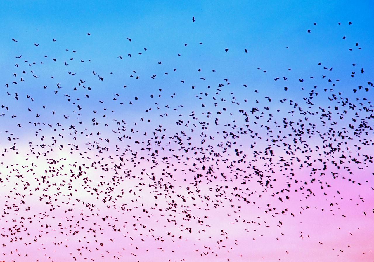 Flock Of Birds Flying Against Dramatic Sky
