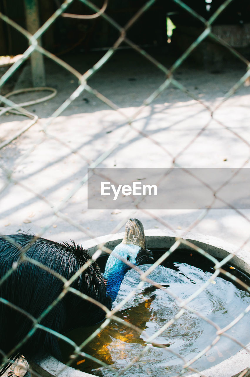 animal themes, animal, vertebrate, fence, one animal, bird, cage, no people, chainlink fence, boundary, barrier, animals in captivity, day, metal, animal wildlife, close-up, mammal, birdcage, pets, outdoors