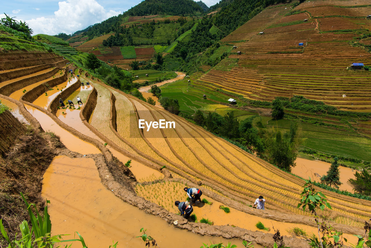 High Angle View Of Terraced Field