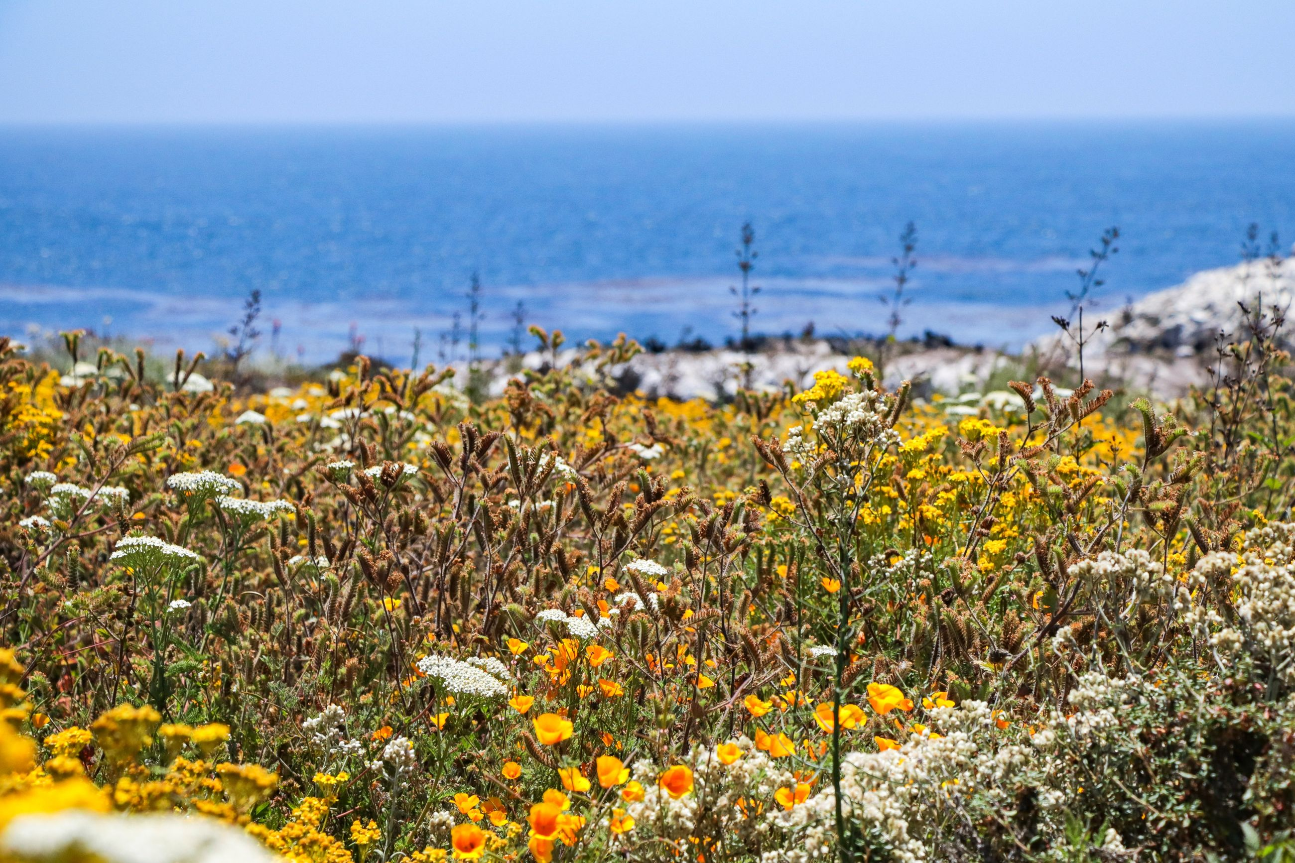 SCENIC VIEW OF SEA AND YELLOW FLOWERS