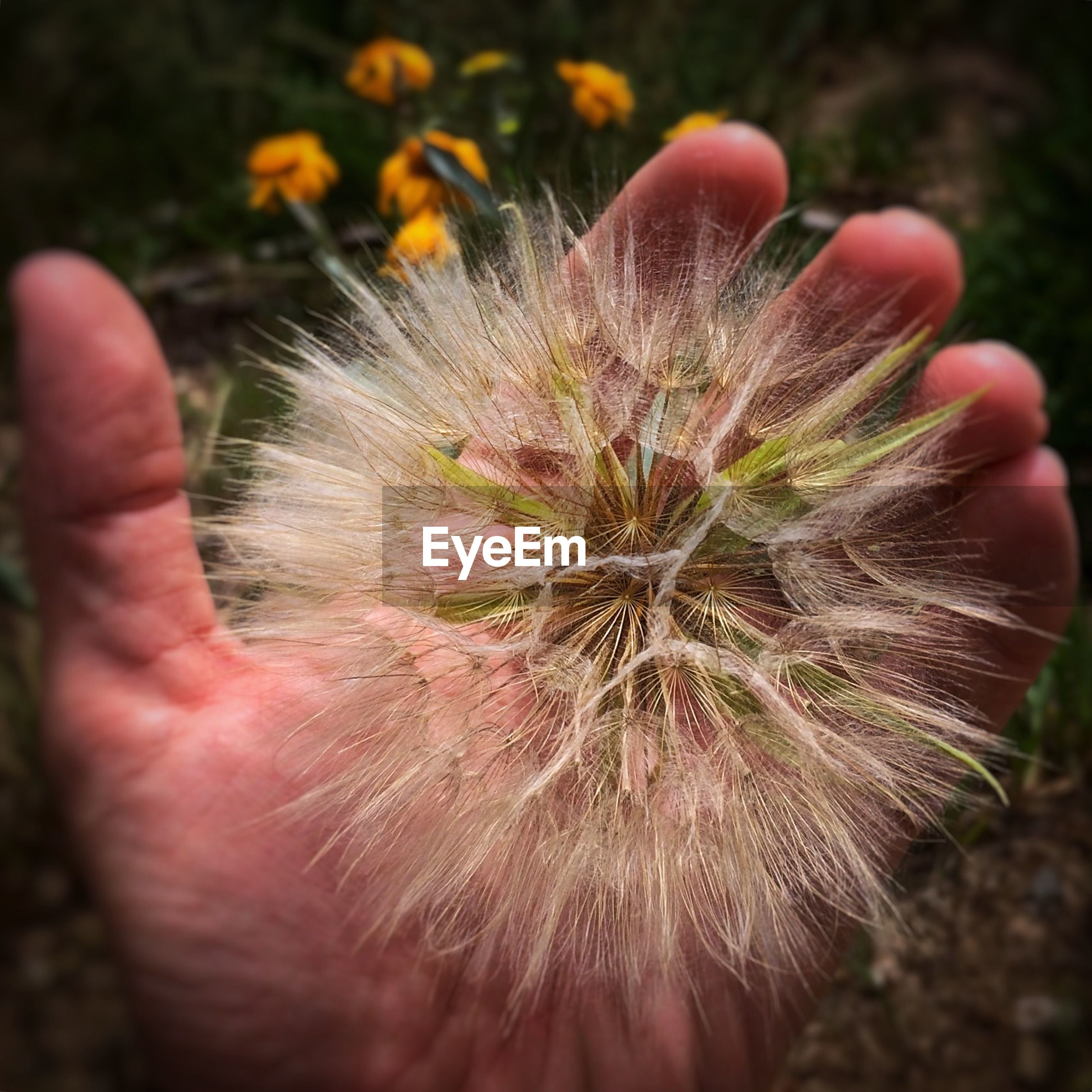Cropped image of hand holding wildflower