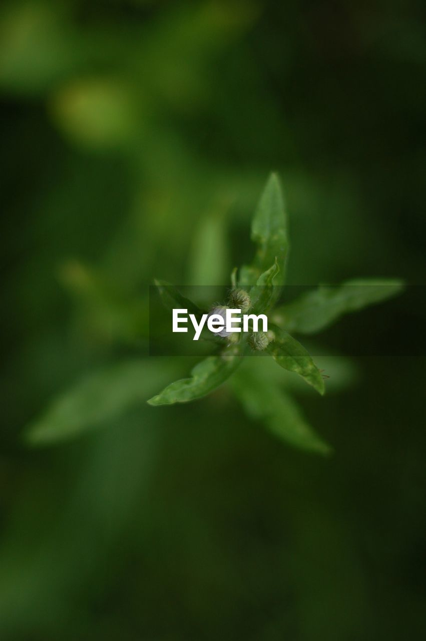 growth, nature, flower, plant, no people, green color, beauty in nature, fragility, outdoors, close-up, freshness, day
