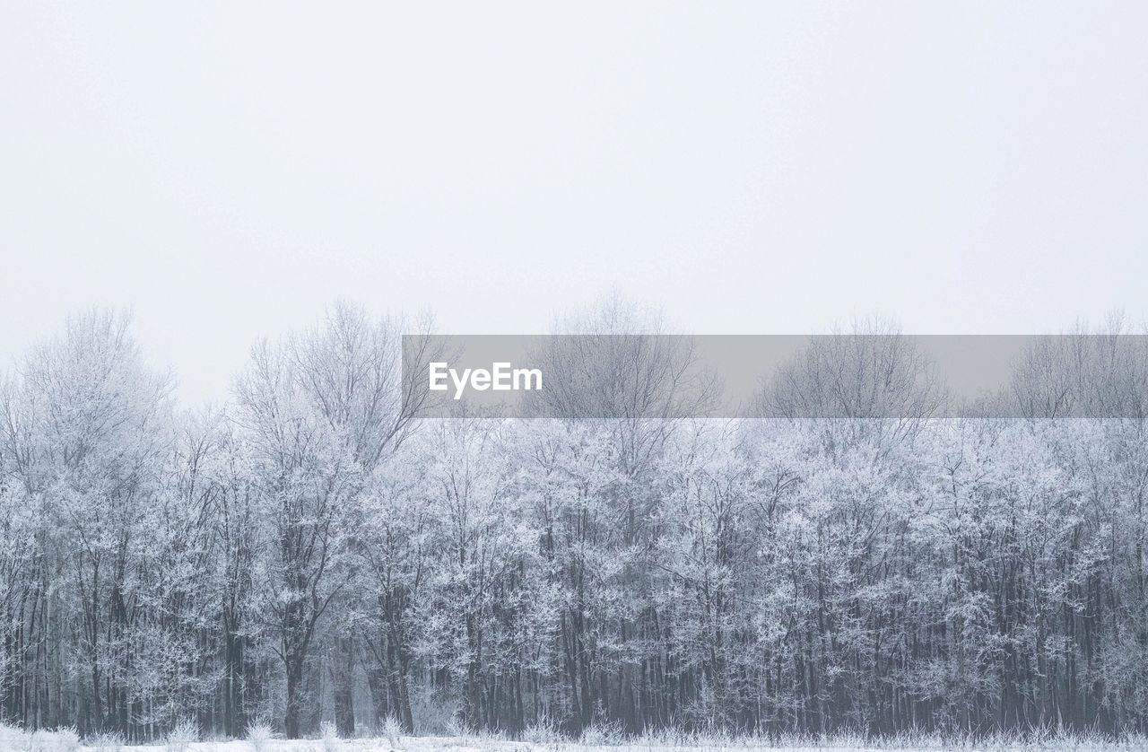 winter, cold temperature, tree, nature, snow, tranquility, beauty in nature, tranquil scene, weather, no people, outdoors, scenics, day, landscape, clear sky, forest, bare tree, sky