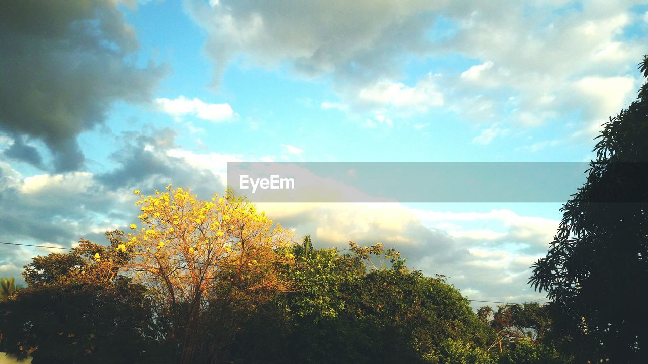 tree, sky, nature, beauty in nature, cloud - sky, low angle view, autumn, tranquility, day, outdoors, no people, scenics, growth, leaf