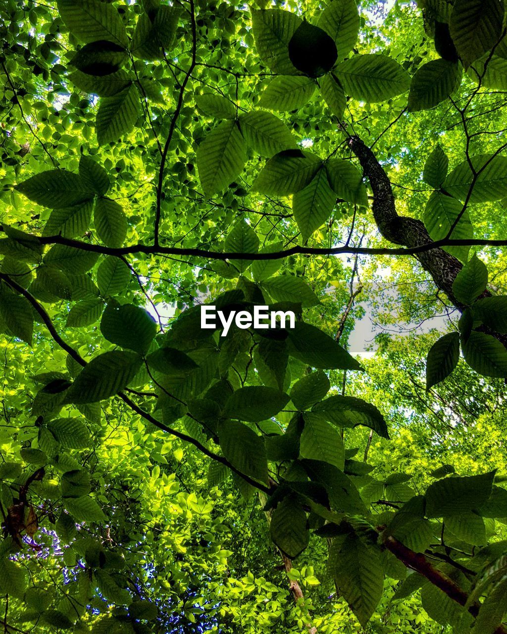 growth, tree, nature, green color, leaf, branch, beauty in nature, day, freshness, outdoors, no people, low angle view, forest, close-up
