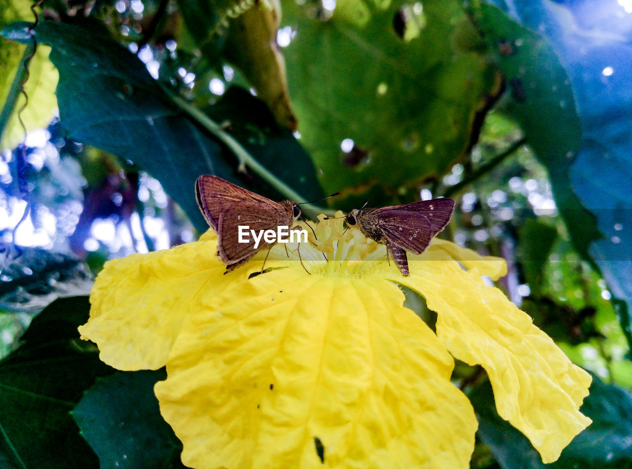 insect, animals in the wild, animal themes, one animal, growth, flower, nature, no people, yellow, leaf, outdoors, beauty in nature, fragility, freshness, animal wildlife, butterfly - insect, day, plant, close-up, petal, perching, pollination, flower head