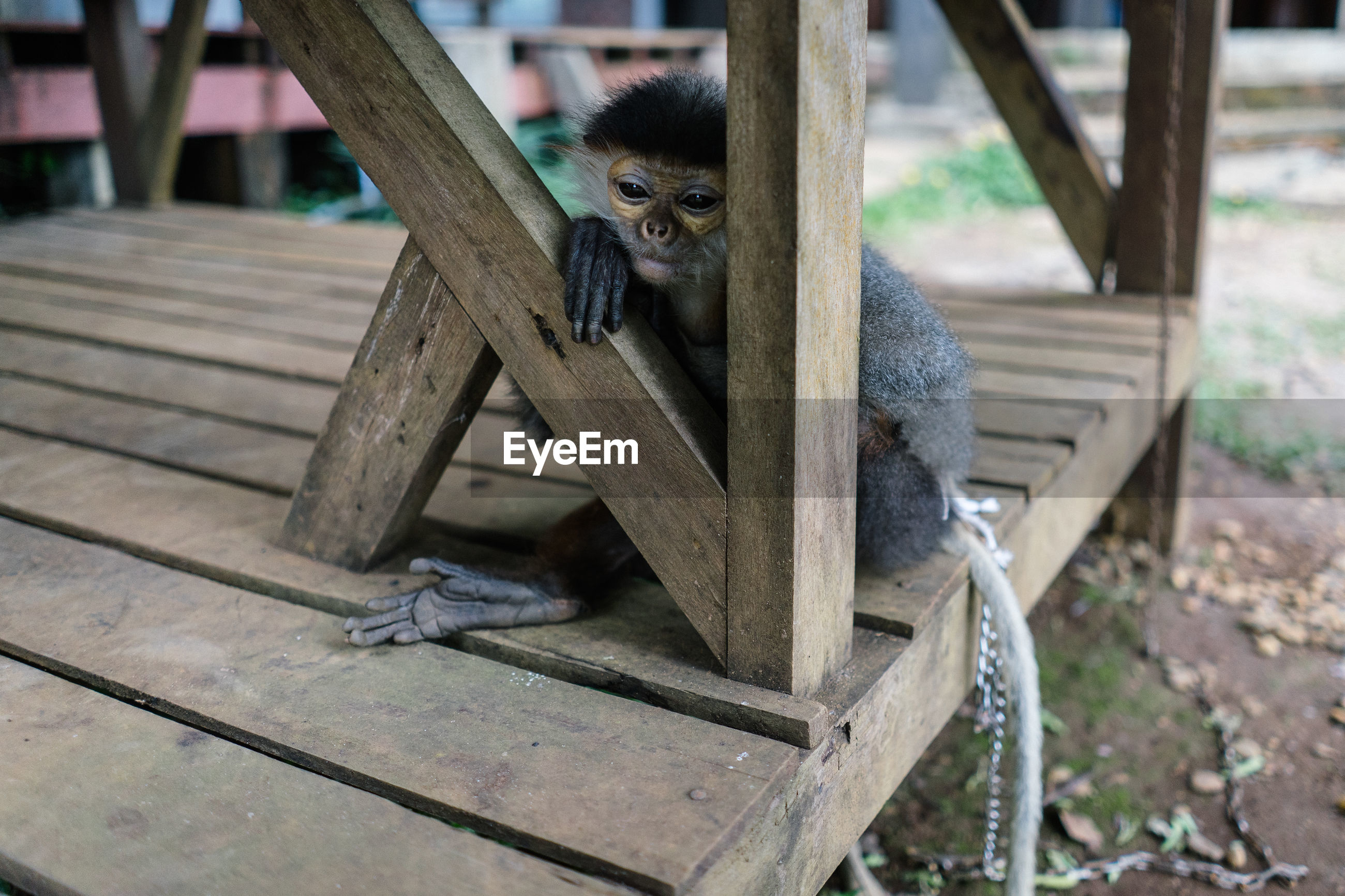 HIGH ANGLE VIEW OF MONKEYS SITTING ON BENCH