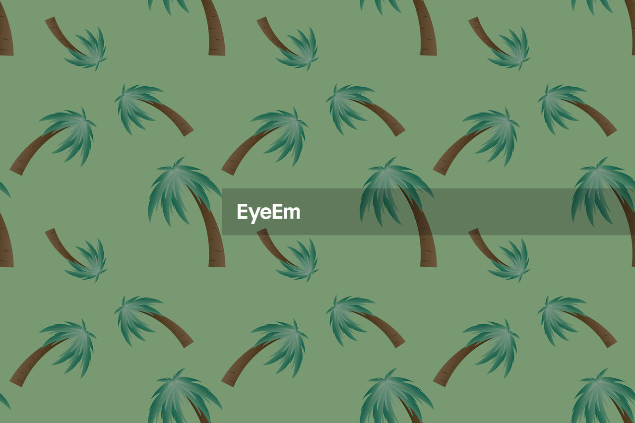 backgrounds, no people, full frame, green color, palm tree, nature, beauty in nature, growth, pattern, indoors, tropical climate, day, animal wildlife, grass, plant, animal, bird, close-up, vertebrate