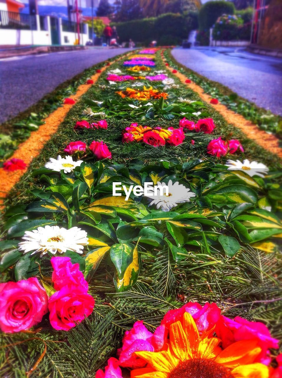 Idyllic view of flowerbed amidst road