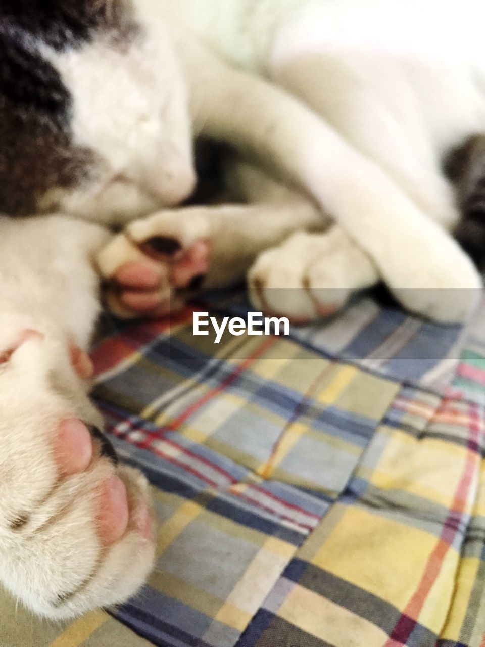 pets, domestic animals, one animal, animal themes, indoors, blanket, domestic cat, mammal, lying down, close-up, bed, dog, relaxation, sheet, feline, day, no people
