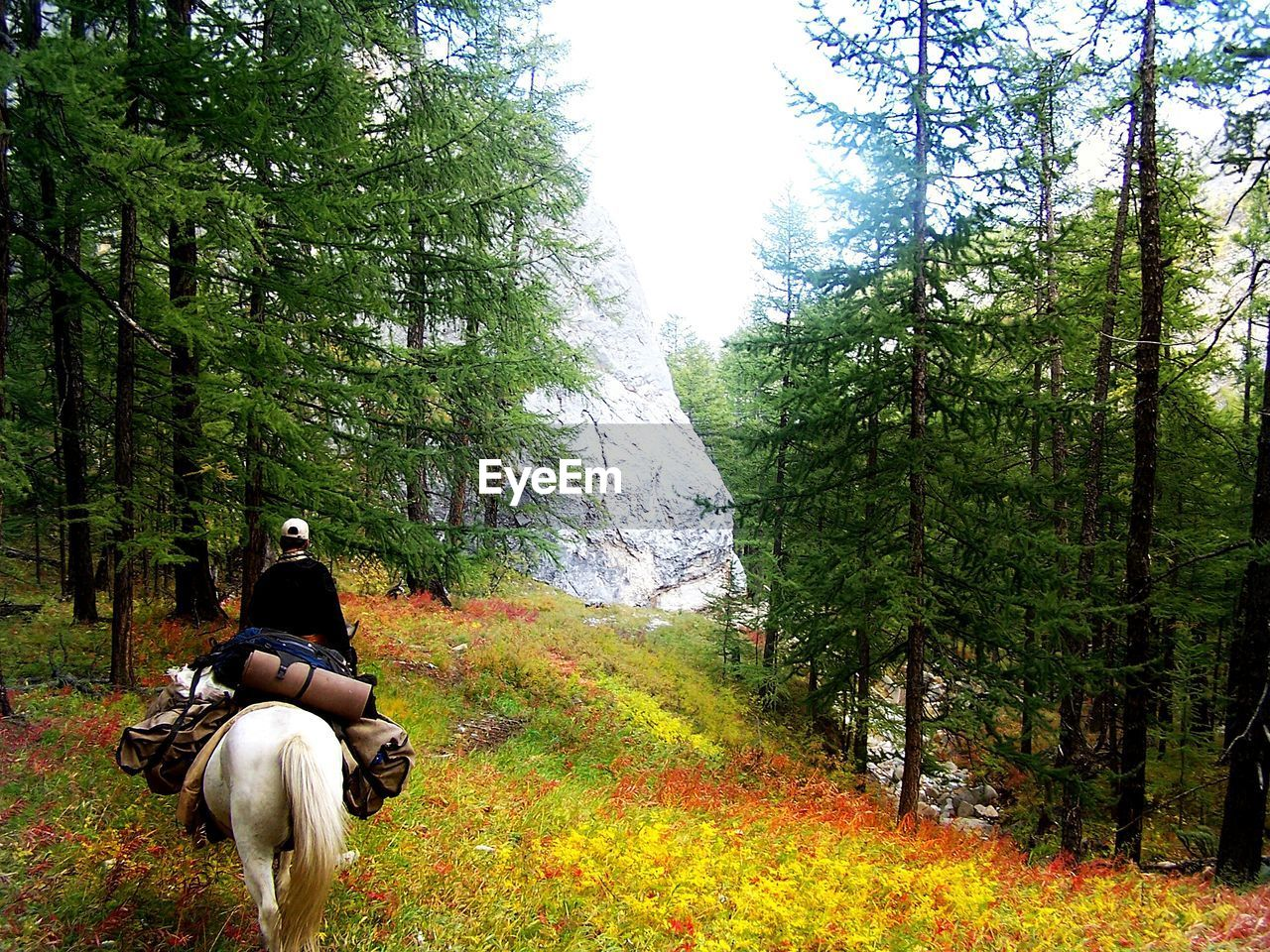 tree, horse, nature, horseback riding, forest, domestic animals, mammal, riding, beauty in nature, real people, rear view, growth, one animal, lifestyles, men, leisure activity, day, outdoors, one person, sky, adult, people