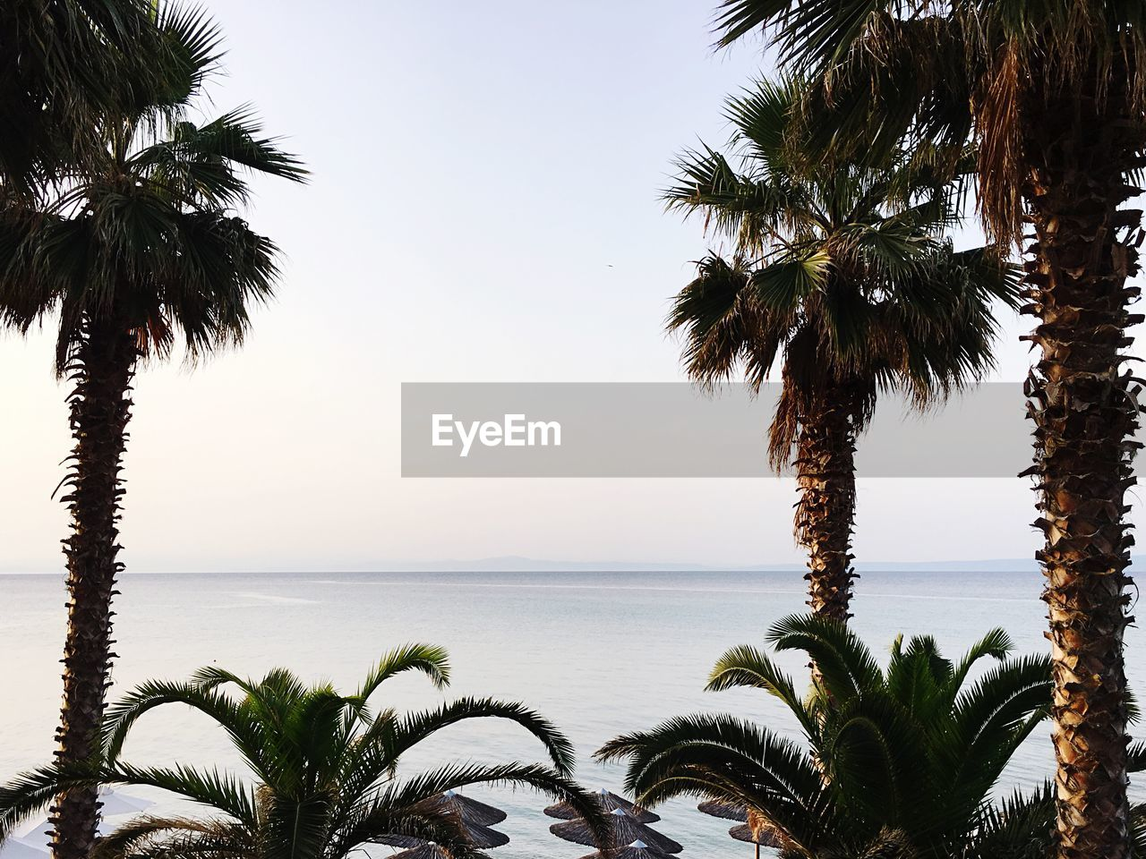 tropical climate, tree, palm tree, water, sky, sea, plant, growth, scenics - nature, beauty in nature, tranquility, nature, horizon over water, clear sky, tranquil scene, horizon, beach, no people, land, outdoors, coconut palm tree, palm leaf, tropical tree, swimming pool