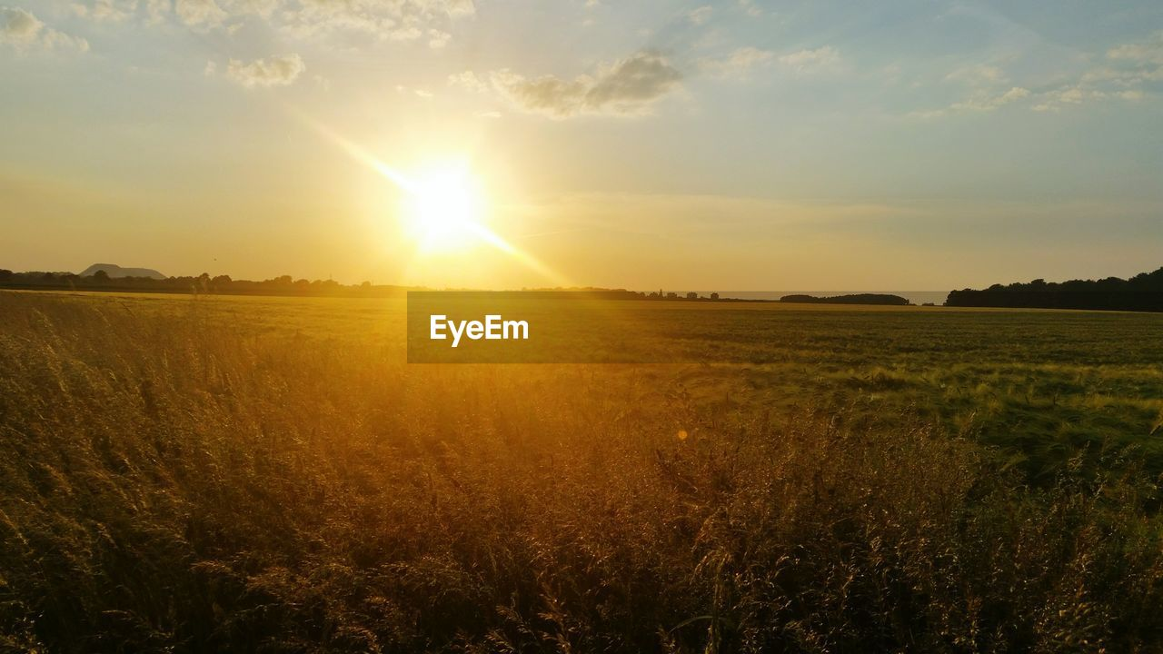 sun, sunset, field, sunbeam, nature, sunlight, tranquility, tranquil scene, beauty in nature, landscape, scenics, growth, no people, sky, agriculture, outdoors, grass, rural scene, day