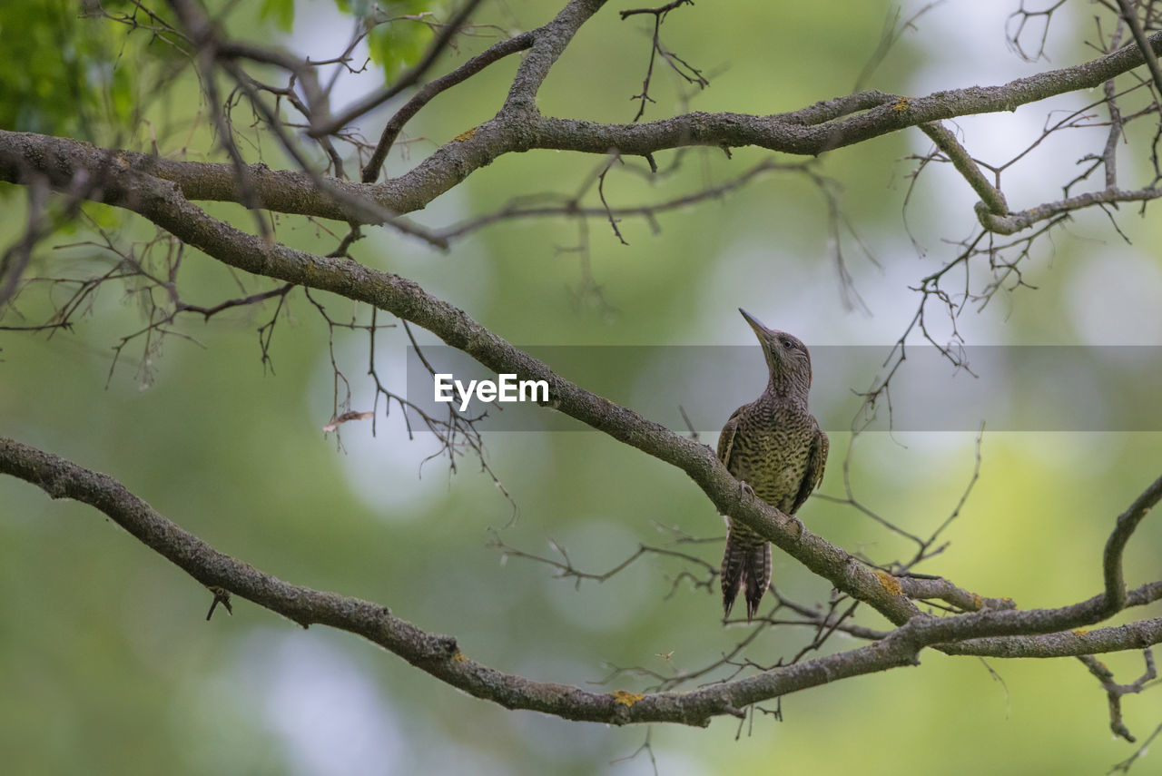 branch, tree, plant, focus on foreground, bird, nature, vertebrate, animal, animal themes, animal wildlife, day, perching, animals in the wild, one animal, no people, beauty in nature, outdoors, low angle view, growth, selective focus