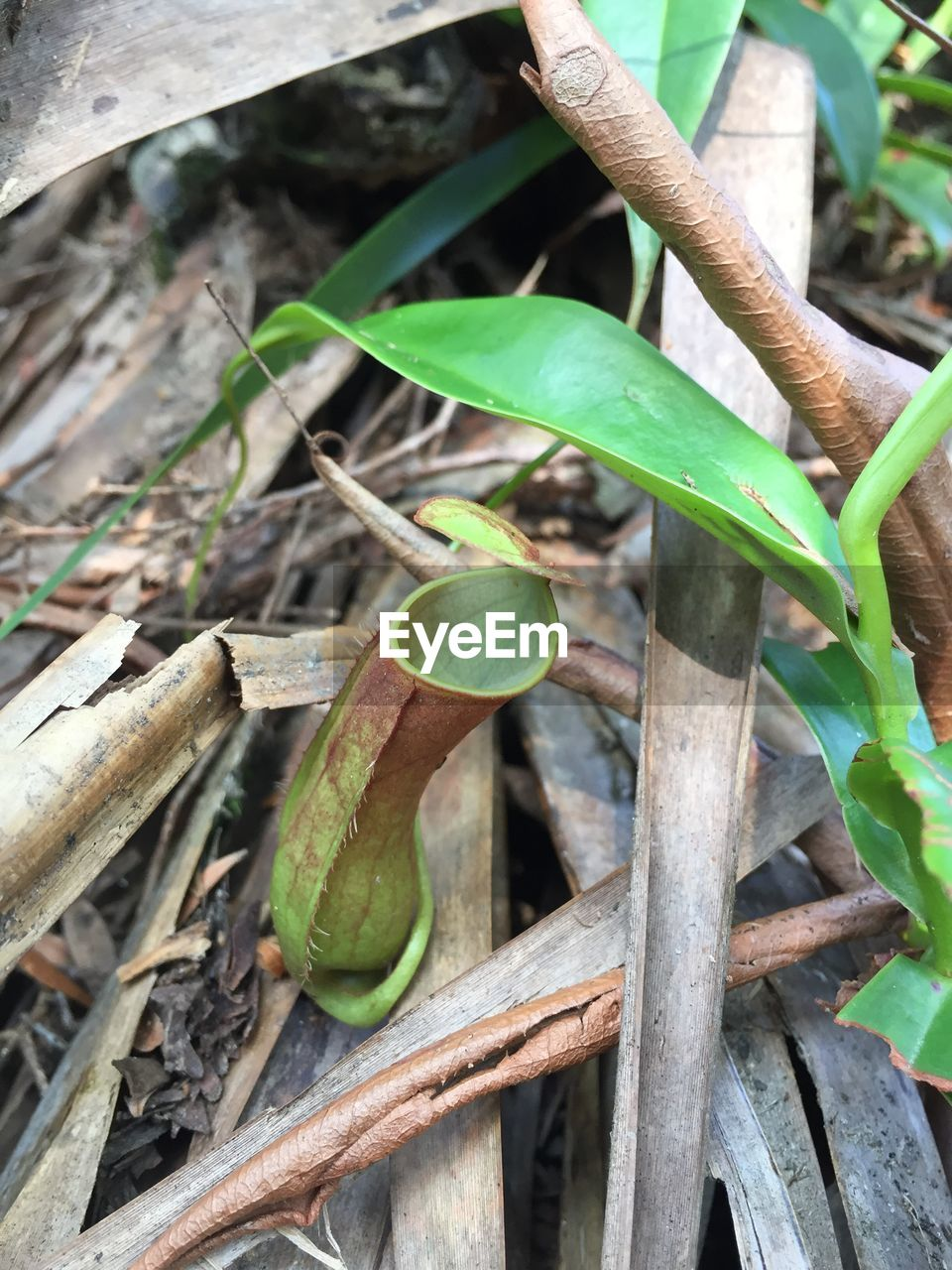 growth, green color, leaf, no people, plant, day, nature, outdoors, close-up, banana tree, freshness