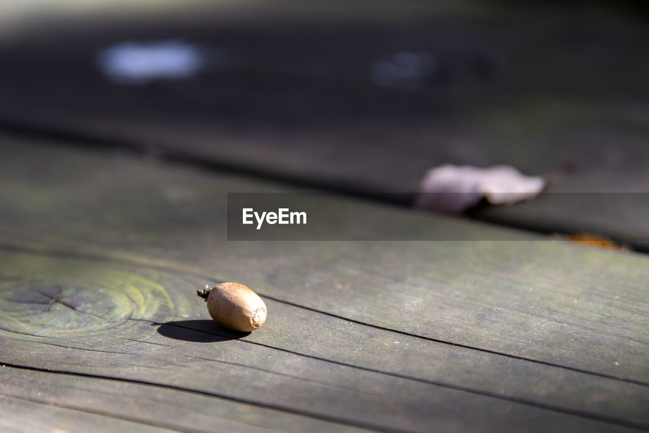 High angle view of nut on wooden bench